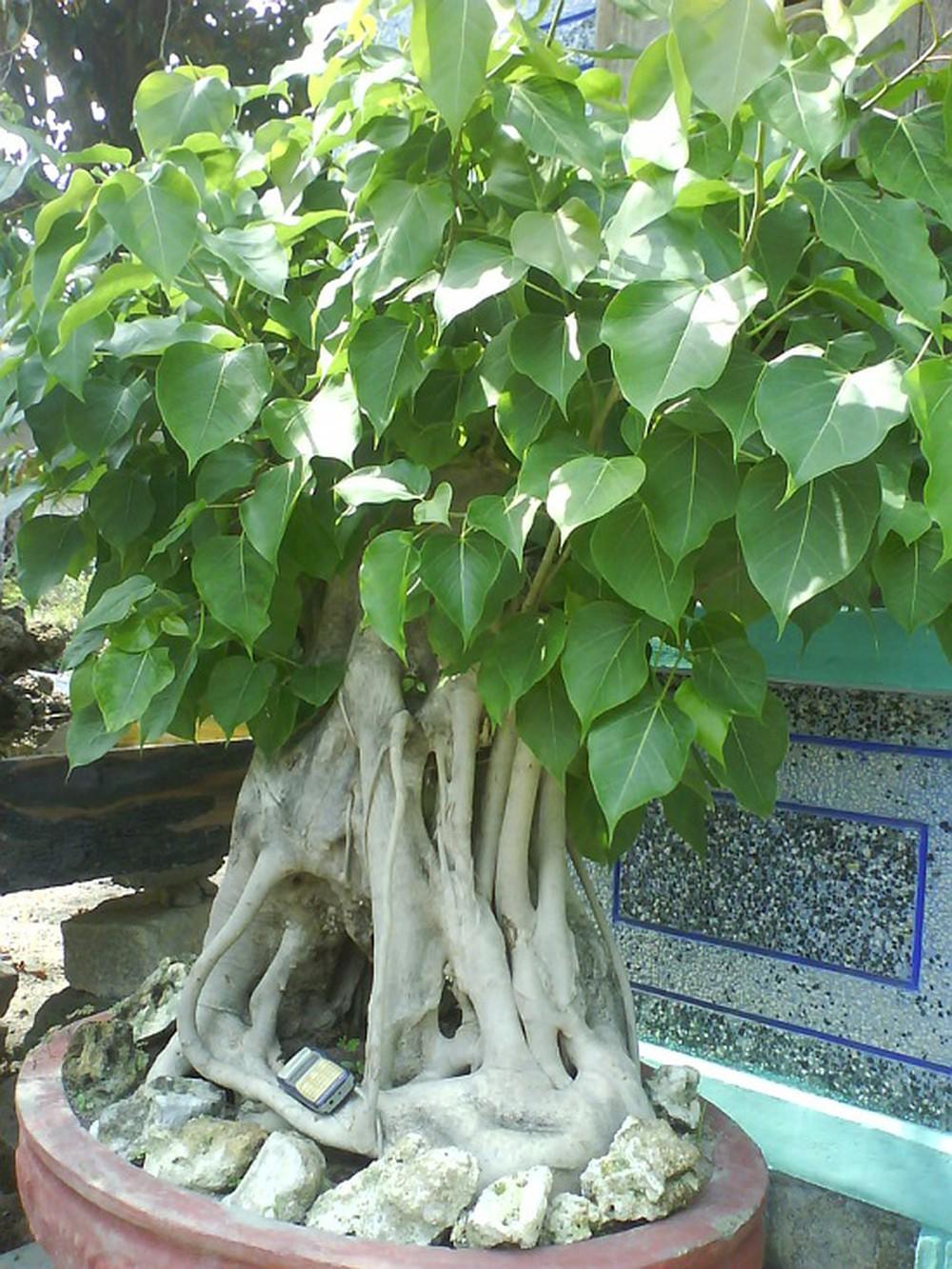 Nên trồng cây gì ở nhà thờ họ đẹp và hợp phong thủy